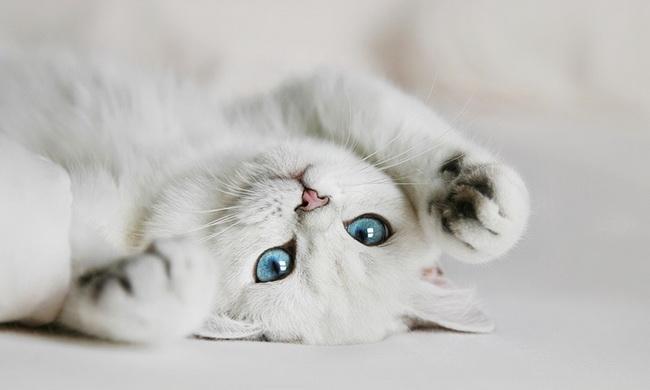 Чем поразить любимую: пушистый котенок