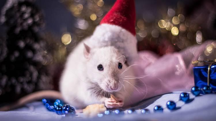 Новый год 2020 - Белая Крыса