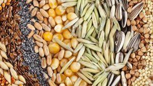 Сколько лет хранятся семена овощей?